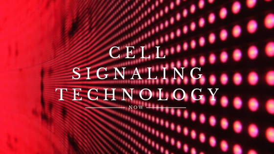 CELL SIGNALING-TECHNOLOGY-NOW