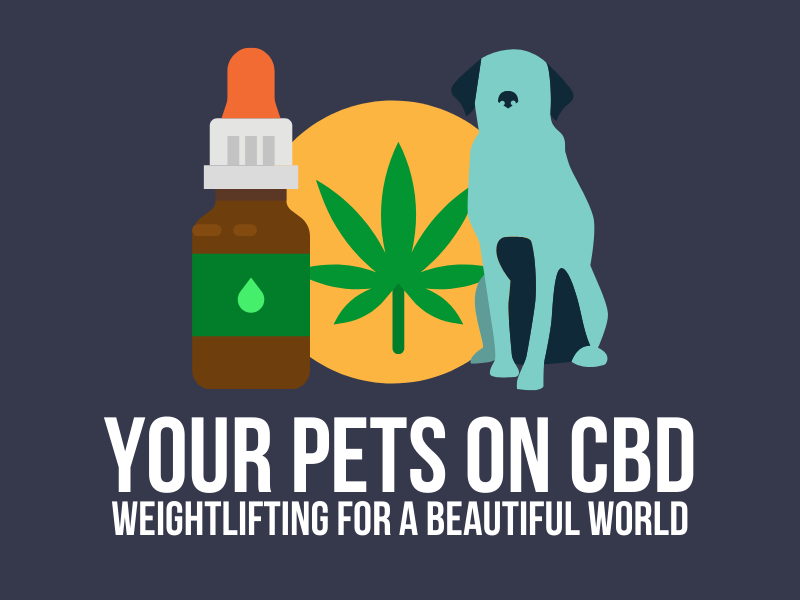 YOUR PETS ON CBD